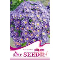 园艺种子  圆球翠菊