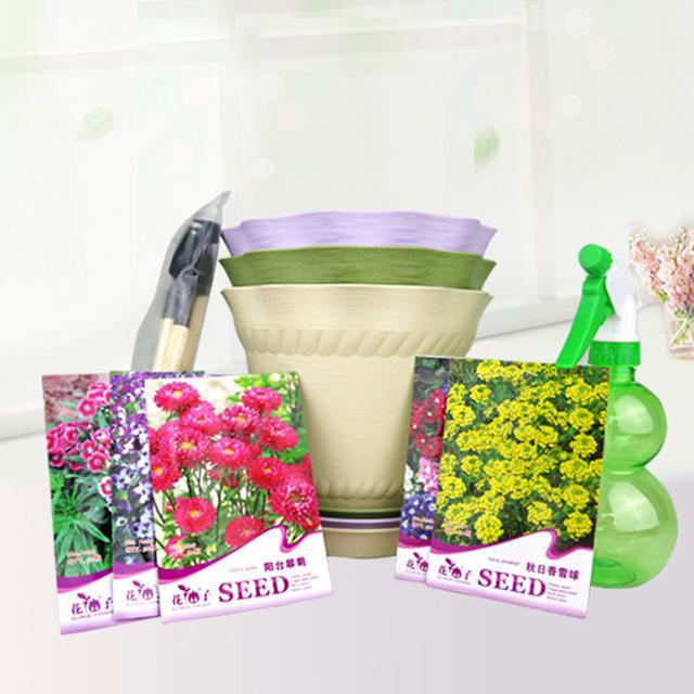 阳台庭院花卉种子秋冬季易种  5种花卉种子套餐 含花盆种子喷壶工具