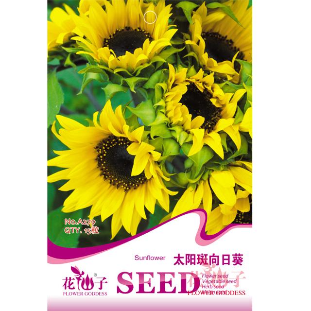 园艺种子  太阳斑向日葵