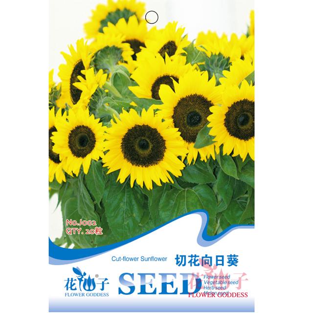园艺种子 切花向日葵
