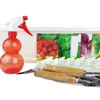 春季特惠阳台庭院种菜籽  5种蔬菜种子套餐 含花盆种子喷壶工具