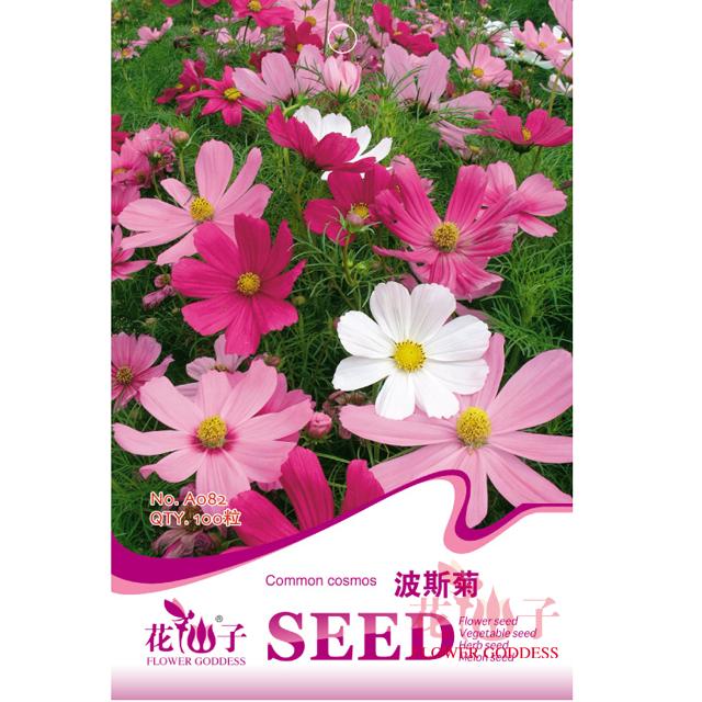 花海 园艺种子  波斯菊